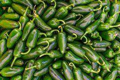 Pile of Jalapeno peppers for sale stock images