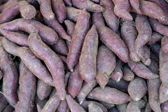 A pile of Japanese sweet potatoes. stock photo