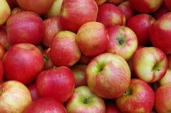 Pile jaune rougeâtre de pomme images libres de droits