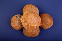 A pile of juicy and tropical coconuts on a bright blue background. Ripe and organic coconuts in a center of the composition. Stock Image