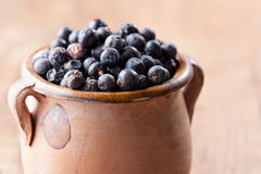 Pile of juniper berries on ceramic bowl Royalty Free Stock Photos