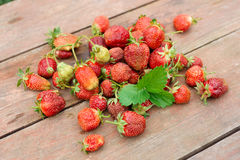 Pile of just gathered strawberries Royalty Free Stock Photo