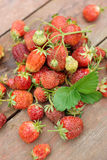 Pile of just gathered strawberries Stock Photography