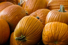 Pile of Large Pumpkins stock image
