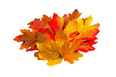 Pile of leaves Royalty Free Stock Images