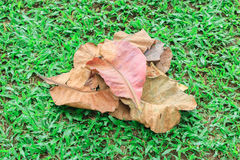 Pile of leaves Stock Images