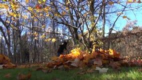 Pile leaves girl raking stock footage