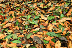 Pile of leaves. On ground Royalty Free Stock Photos
