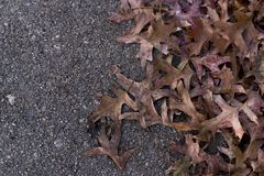 Pile of leaves on the ground background. Pile of fall leaves on the ground with the other side being concrete Stock Photos