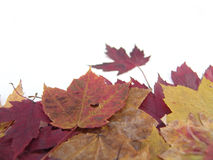 Pile of leaves over white Royalty Free Stock Photography