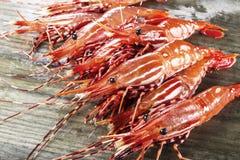 Pile of live shrimp on fishing Dock. Live shrimp on wet fishing dock Stock Image