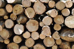 Pile of log Royalty Free Stock Photos