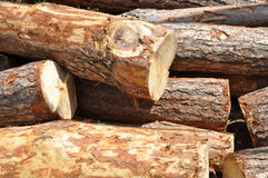Pile of log Stock Photo