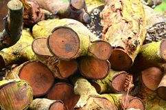 Pile of log. Royalty Free Stock Image