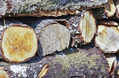 Pile of log Royalty Free Stock Image
