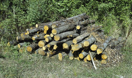 Pile of log Stock Image