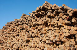 Pile of Log Timbers Stock Photos