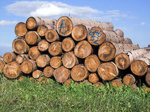 Pile of logs. The image shows pile of logs seen in Bavaria (Germany). In front of the wood is green grass, in the background there is blue sky with some clouds stock images