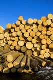Pile of logs Stock Photos