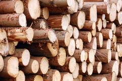 Pile of logs Royalty Free Stock Photography
