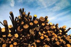 Pile of logs Royalty Free Stock Photos