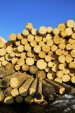 Pile of logs Stock Image
