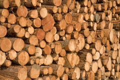 A pile of logs. Stock Images