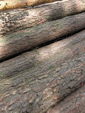 Pile of logs. Stacked for transportation Royalty Free Stock Image