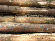 Pile of logs. Stacked for transportation. Damaged bark Royalty Free Stock Images