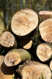 Pile of logs Royalty Free Stock Photos