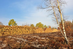 Pile logs Stock Photography