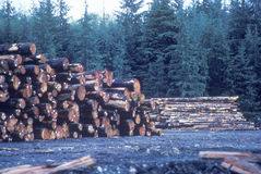 A pile of logs Stock Images