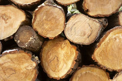 Pile of logs. Cut ready for use in a fire, some winter frost on the bark royalty free stock images