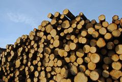 Pile of logs Royalty Free Stock Photo