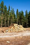 A Pile of Logs Stock Photography