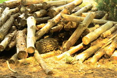 Pile of logs. Pile of cut logs in countryside Royalty Free Stock Photos