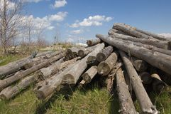Pile of logs. Landscape with Pile of logs against blue sky stock image