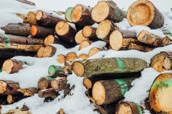 pile of logs covered in white snow Stock Photo