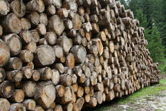 Pile of logs cut by loggers in the mountains 2 Stock Image