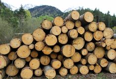 Pile of logs cut by lumberjack in the Woods Stock Image