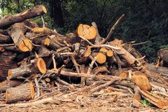 Pile of logs. Forest industry and construction raw material. Royalty Free Stock Photo