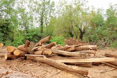 Pile of logs. Forest industry and construction raw material. Royalty Free Stock Photos