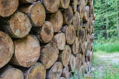 A pile of logs in the forest. Faaborg, Denmark stock photo