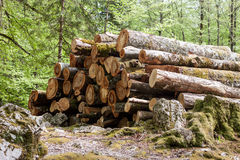 Pile of logs in the forest Royalty Free Stock Photo