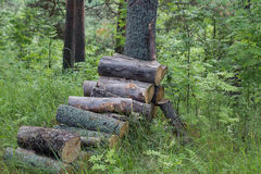 A pile of logs in the forest. A pile of wooden logs in the forest Royalty Free Stock Image