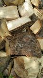 Pile of logs. Pile of freshly cut logs stacked pell mell Royalty Free Stock Photo