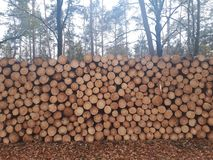 Pile of logs lying in the forest royalty free stock image