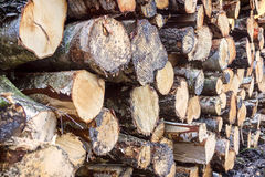 Pile of logs Royalty Free Stock Images