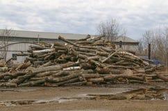 Pile of logs. Large pile of logs Royalty Free Stock Image