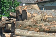 Pile of logs. With moss Stock Image
